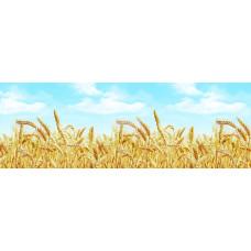 """Кухонный фартук с фотопечатью """"Пшеница"""" 2000*600*1,7мм"""